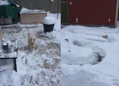 Dogilike.com :: หนุ่มปิ๊งไอเดีย! เปลี่ยนลานหิมะไร้ประโยชน์เป็นสวนสนุกเจ้าตูบ
