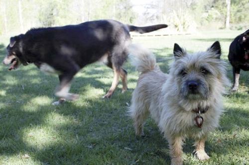 Dogilike.com :: เจ้าของคิดว่าสุนัขหายไป สุดท้ายพบช่วยชีวิตสุนัขของเพื่อนบ้าน!