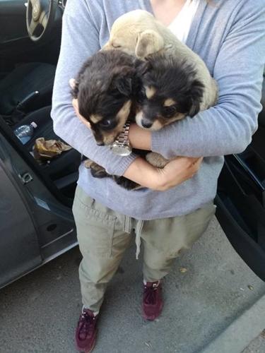 Dogilike.com :: หนุ่มกำลังขับรถกลับบ้าน เจอ 3 ลูกสุนัขอยู่ข้างถนนจึงตัดสินใจทำแบบนี้ !