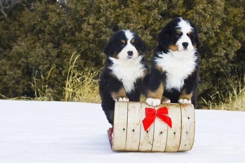 Dogilike.com :: จัดอันดับ 5 สายพันธุ์น้องหมาที่ต้อนรับแขกได้ดี