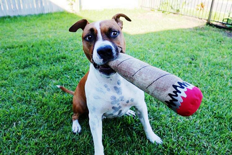 Dogilike.com :: แจกโปรแกรมดูแลน้องหมาให้น่ารักง่าย ๆ ภายใน 7 วัน