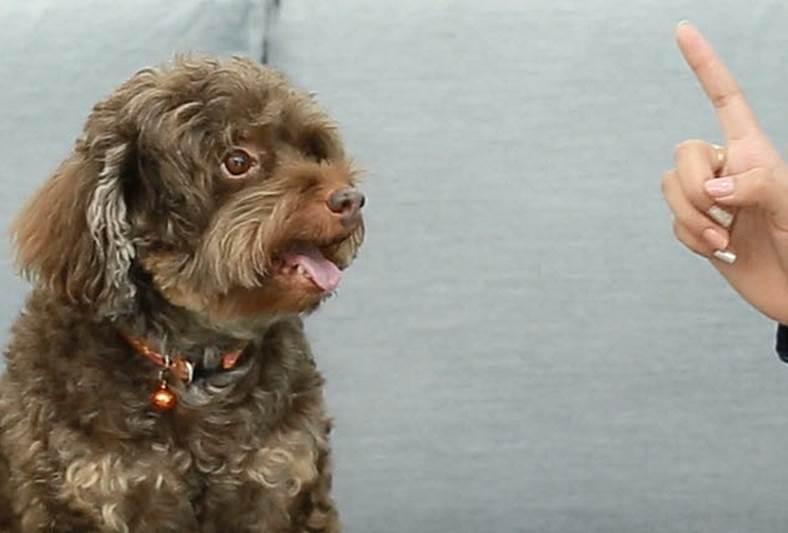 Dogilike.com :: D.I.Y. ฝึกหมา Alert ให้นั่งคอยได้ใน 3 นาที