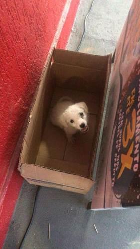 Dogilike.com :: หนูน้อยเจอลูกหมาระหว่างทางกลับบ้าน จับใส่กระเป๋าแล้วพาไปทำแบบนี้ ! (มีคลิป)