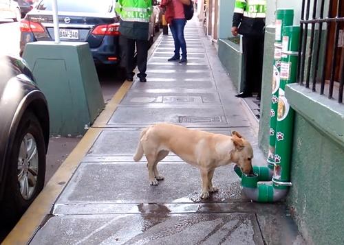 Dogilike.com :: สถานีตำรวจเปรูทำเครื่องให้อาหารและน้ำกับสุนัขที่ถูกทอดทิ้ง!
