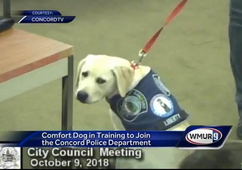 Dogilike.com ::  เผยโฉม เจ้า Liberty สุนัขช่วยลดความเครียดตัวแรกของกรมตำรวจในอเมริกา !