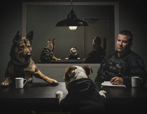 Dogilike.com :: หล่อๆเลย! เมื่อเหล่าสุนัขตำรวจถ่ายภาพทำปฏิทินนำเงินช่วยมูลนิธิฯ