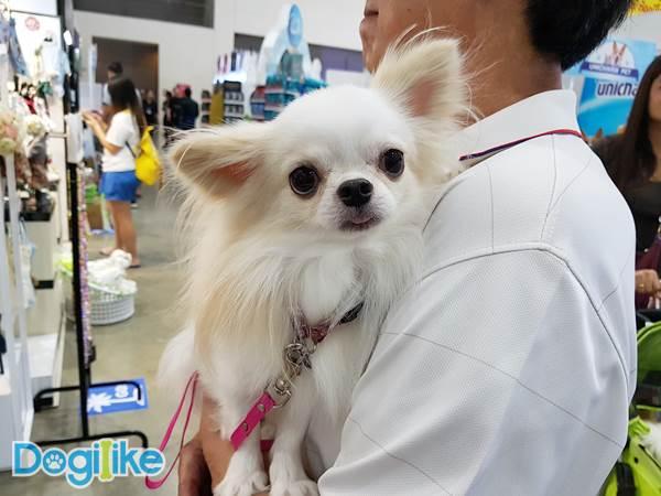 Dogilike.com :: Dogilike พาคนรักน้องหมาขาช้อปตะลุย Pet Variety ปีที่ 8
