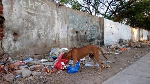Dogilike.com :: แชร์เลย! 3 ทริค รับน้องหมา(จร)ตัวใหม่เข้าบ้านยังไง ไม่ให้ตูบตัวเก่าดราม่า