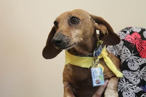 Dogilike.com :: 5 เทคนิคอัพเกรดน้องหมาจรฯ ให้เป็นหมาคุณหนูสุดเป๊ะ