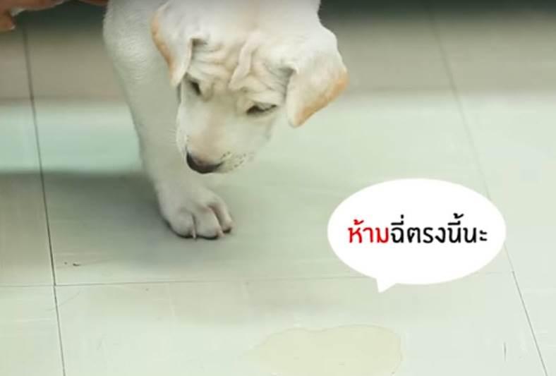 Dogilike.com :: D.I.Y. 4 Step ง่ายๆ ฝึกลูกหมาให้ขับถ่ายเป็นที่