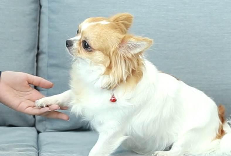 Dogilike.com :: D.I.Y. ฝึกน้องหมาสวัสดีง่ายๆ ใน 3 นาที