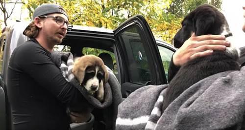 Dogilike.com :: ร้องลั่นป่า! 2 ลูกเซนต์เบอร์นาร์ดถูกช่วยชีวิตหลังถูกทิ้งในป่าทึบนาน 4 วัน