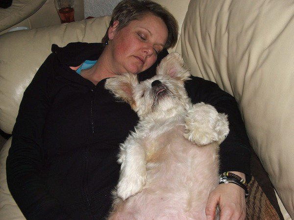 Dogilike.com :: นักวิจัยเผย นอนหลับพร้อมกับสุนัข ช่วยลดอาการปวดเรื้อรังได้ !