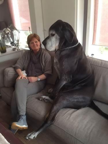 Dogilike.com :: ตัวใหญ่ใจมุ้งมิ้ง! เจ้าของพากันโพสต์ภาพ เกรทเดน ตัวโตแต่อ้อนเก่ง