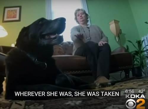 Dogilike.com :: ปาฏิหาริย์มีจริง! เจ้าตูบหายไป 10 ปีวันนี้ได้พบเจ้าของแล้ว