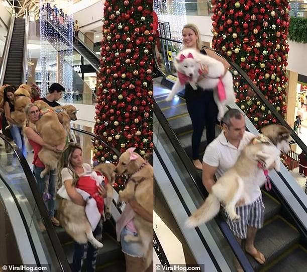 Dogilike.com :: ห้างแตก! แก๊งน้องหมาบุกห้างในบราซิล งานนี้เรียกรอยยิ้มไปเต็มๆ(คลิป)