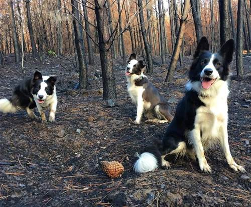 Dogilike.com :: เท่สุดๆ! 3 เจ้าตูบนักโปรยเมล็ดพันธุ์กับภารกิจฟื้นฟูป่าในชิลี