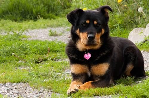 Dogilike.com :: จัดอันดับ 5 ชื่อที่คนนิยมตั้งให้น้องหมาจรฯ