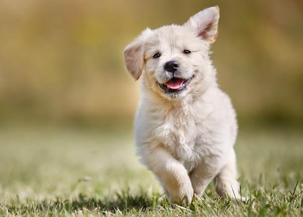 Dogilike.com :: 5 วีรกรรมสุดแสบที่เจ้าของน้องหมาเจอตอนอาบน้ำ