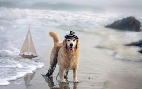 Dogilike.com :: 5 สถานการณ์คาดไม่ถึง ที่ต้องระวังเมื่อพาน้องหมาไปเที่ยว