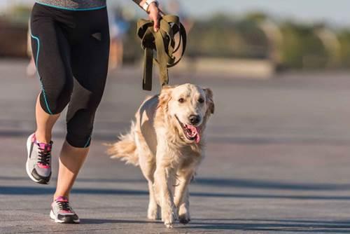 Dogilike.com :: 4 Tips วางแผนค่าใช้จ่ายน้องหมาให้มีเงินเหลือใช้ตลอดปี !