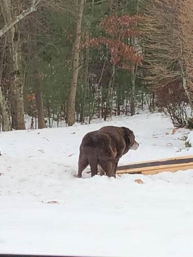 Dogilike.com :: เพื่อนบ้านสงสัยทำไมสร้างทางเดินไว้หน้าบ้าน ที่สุดได้พบคำตอบที่อบอุ่นหัวใจ !