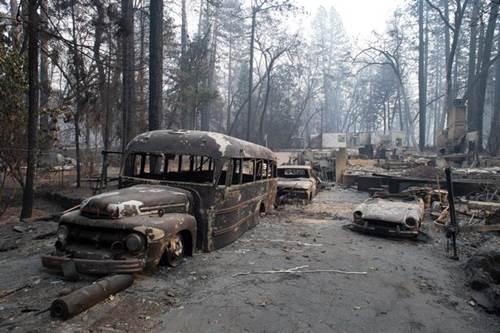 Dogilike.com :: เจ้าตูบซื่อสัตย์! คอยเฝ้าบ้านหลังเกิดเหตุไฟป่าในสหรัฐฯ นานกว่า 1 เดือน