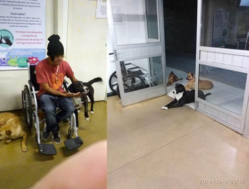 Dogilike.com :: ชายไร้บ้านเข้ารักษาตัวในโรงพยาบาล แต่สิ่งนี้บอกว่า เขาไม่ได้มาเพียงลำพัง!
