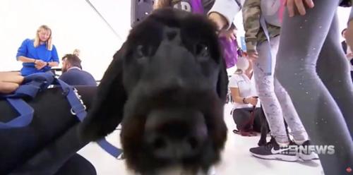 Dogilike.com :: เจ๋ง! สนามบินนำเจ้าตูบมาช่วยคลายเครียดให้ผู้โดยสารก่อนขึ้นเครื่อง