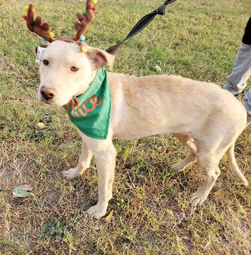 Dogilike.com :: พลิกชีวิตเจ้าตูบขี้เรื้อนข้างถนน ถูกช่วยเหลือจนอาการดีขึ้นแบบนี้!