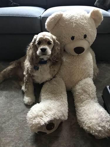 Dogilike.com :: ขออยู่ใกล้ๆ! เจ้าตูบติดตุ๊กตาถึงกับตามเฝ้าหน้าเครื่องซักผ้า (คลิป)