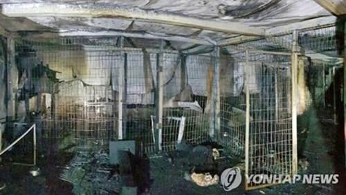 Dogilike.com :: เศร้า! ไฟไหม้ศูนย์พักพิงสัตว์ในเกาหลี หมาแมว 260 ชีวิตดับ