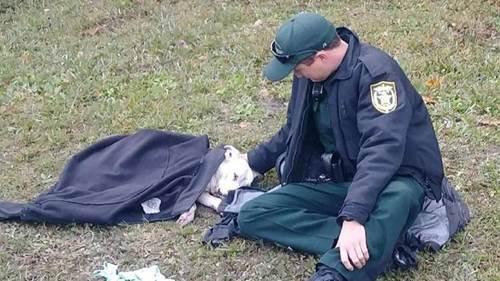 Dogilike.com :: ปลื้ม! คุณตำรวจใจดีนั่งดูแล ปลอบใจสุนัขถูกรถชน