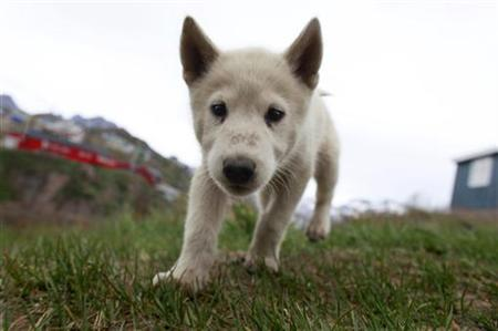 Dogilike.com :: อังกฤษเอาจริง! สั่งร้านสัตว์เลี้ยงห้ามขายลูกหมา-ลูกแมว