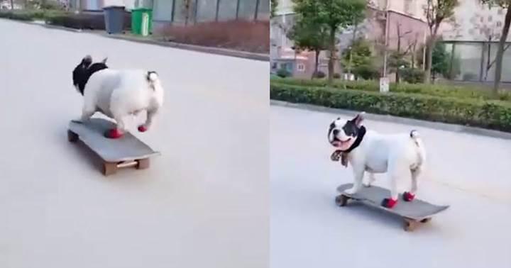 Dogilike.com :: ชาวเน็ตทึ่ง! เจ้าตูบโชว์เล่นสเก็ตบอร์ดลีลายิ่งกว่ามือโปร (คลิป)