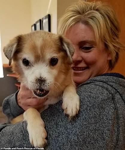 Dogilike.com :: คนรักสัตว์แห่ขออุปการะเจ้าตูบไร้จมูก-ฟันเก หลังรู้เรื่องราวในอดีต!