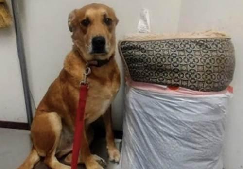 Dogilike.com :: สงสาร! เจ้าตูบถูกทิ้งที่ศูนย์พักพิงฯ พร้อมเบาะนอน ของเล่น