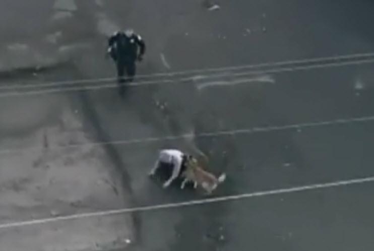 Dogilike.com :: เผยคลิปนาทีระทึก สุนัขตำรวจเข้าชาร์จโจรจี้ชิงทรัพย์ในสหรัฐฯ !