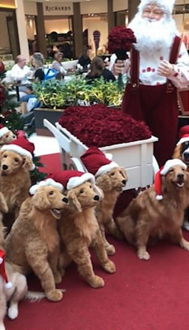 Dogilike.com :: เนียนได้อีก! เมื่อ 4 เจ้าตูบทำเนียนเป็นหุ่นยนต์สุนัขในตั้งโชว์ไว้กลางห้างฯ