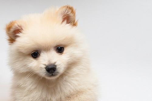 Dogilike.com :: จัดอันดับ 5 สายพันธุ์น้องหมาขนนุ่มฟู กอดอุ่นรับลมหนาว