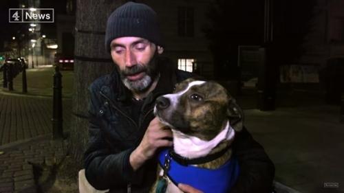 Dogilike.com :: ดังทั่วโลก! เรื่องราวเจ้า Bailey สุนัขที่เปลี่ยนชีวิตชายไร้บ้านติดยา
