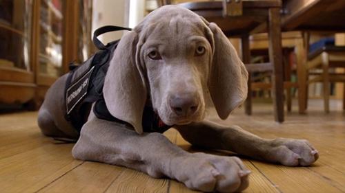 Dogilike.com :: เจ๋งสุดๆ! พิพิธภัณฑ์ในสหรัฐฯ จ้างสุนัขดมกลิ่นดูแลงานศิลปะ