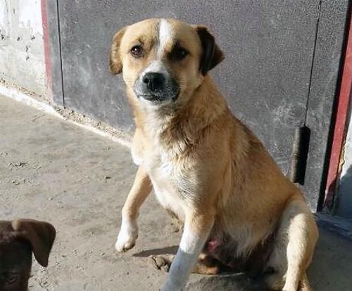 Dogilike.com :: เผยคลิปนาที สุนัขแม่ลูกอ่อนพยายามวิ่งตามรถยนต์ที่ทอดทิ้งมัน !