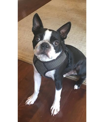 Dogilike.com :: เผยเคล็ดลับเมื่อเจ้าตูบกลัวการตัดเล็บ คุณพ่อก็เลยจัดให้แบบนี้ !