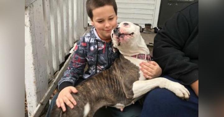 Dogilike.com :: พิทบูลใจกล้า! ไล่กัดโจรหนีเตลิด เด็กชาย 9 ปีอยู่บ้านลำพังรอดหวิด