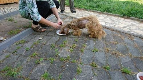 Dogilike.com :: เจ้า Frodo สุนัขข้างถนนที่หลายคนมองว่าน่ากลัว กับชีวิตใหม่ที่ได้รู้จักความรัก !
