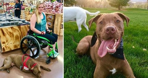 Dogilike.com :: เจ้า Colt สุนัขช่วยเหลือที่ดีที่สุดในโลก กับหน้าที่ดูแลหญิงสาวผู้เคยผ่าตัดสมอง !