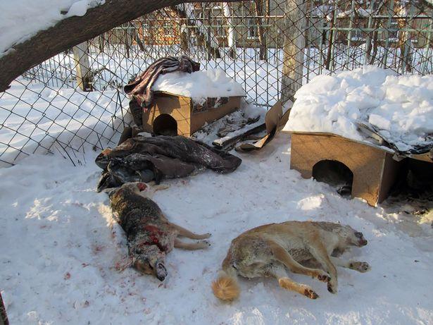 Dogilike.com :: ปูติสั่งฆ่าสุนัขจรจัดต้อนรับฟุตบอลโลก 2018 ฟากคนรักสัตว์พากันแห่ร้องเรียน !