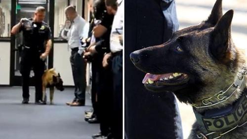 Dogilike.com :: ตั้งแถวอำลา! เจ้า Bronx สุนัขตำรวจมะกันทำงานนานกว่า 8 ปี
