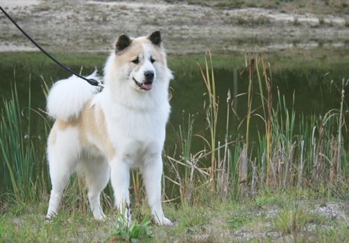 Dogilike.com :: จัดอันดับ 5 ชื่อไทยๆ ที่เจ้าของชอบตั้งให้น้องหมา